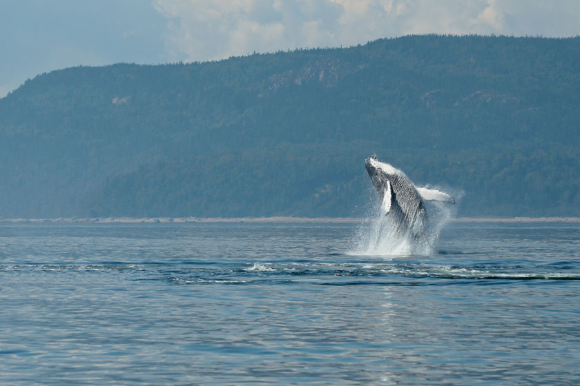 Whale watching, Quebec