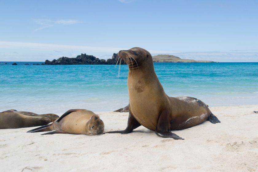 Seals at Galapagos