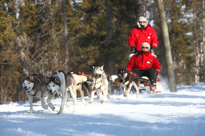 Husky safari in Harriniva