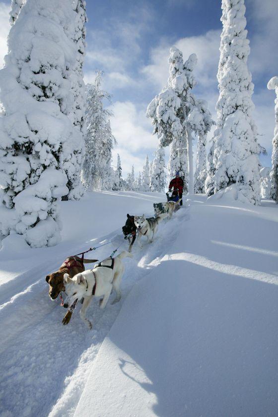 Husky safari, Finland