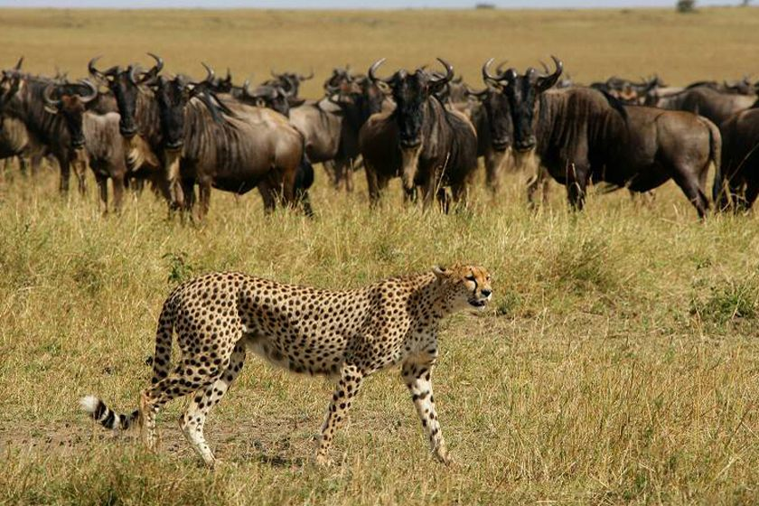 Elephant Pepper Camp, Masai Mara