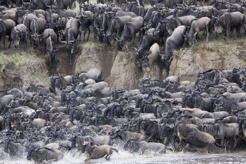 The Great Migration, Kenya