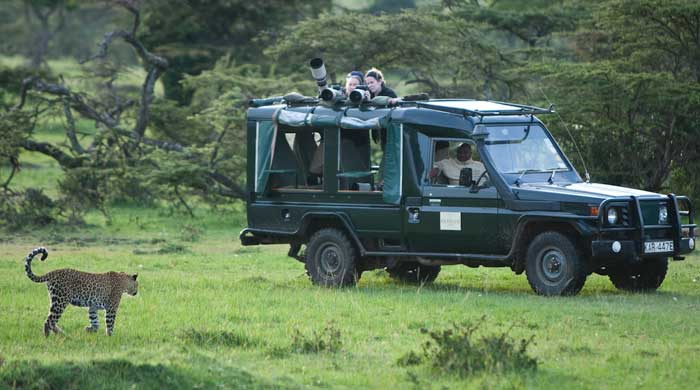 On safari, Kicheche Mara Camp, Kenya