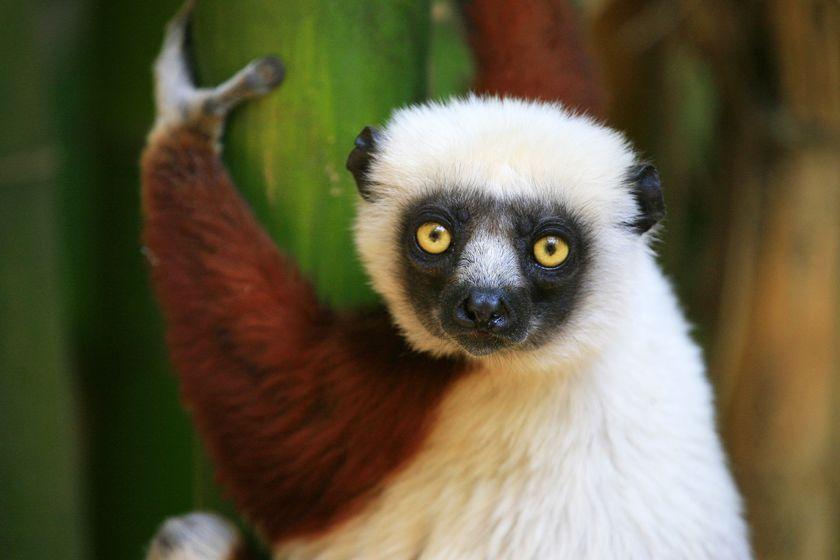 Lumur, Madagascar