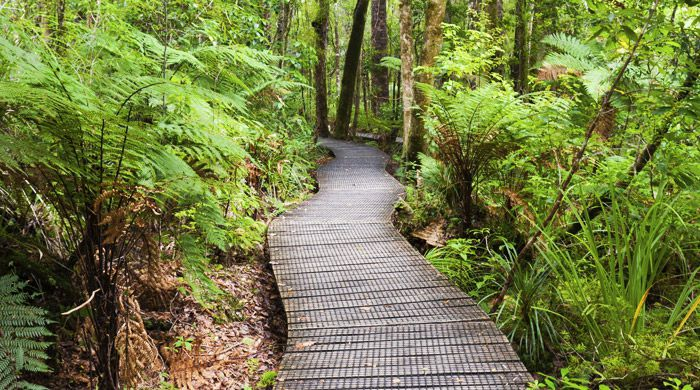 Waipoua Forest, New Zealand