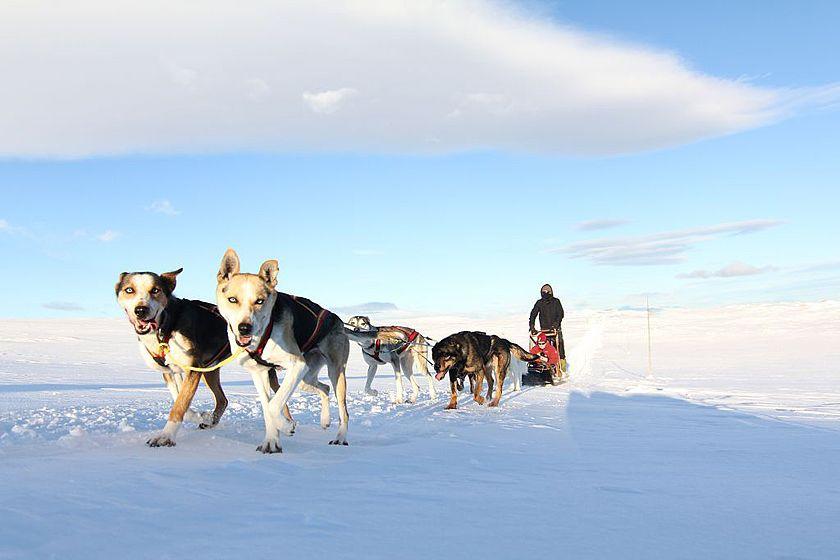 Huskies in Geilo