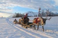 Reindeer Sami Safari