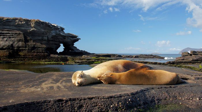 Sea lions, Galapagos Islands, Ecuador
