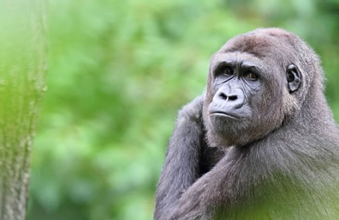 Gorilla tracking, Rwanda