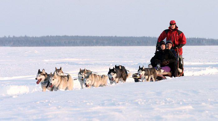 Husky safari, Brandon Lodge, Swedish Lapland