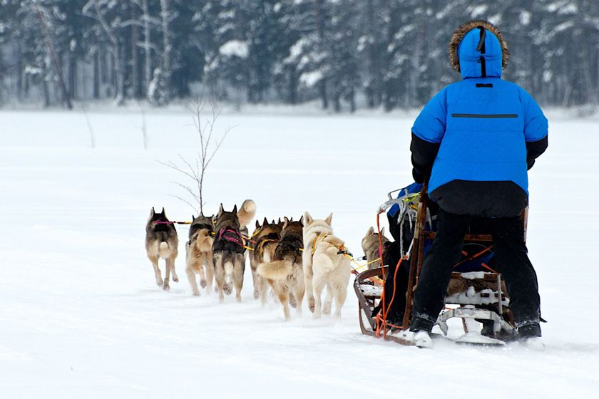 Dog sledding at Sorbyn Lodge