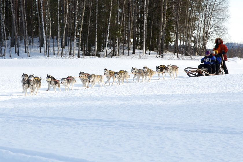 Dogsledding at Sorbyn Lodge