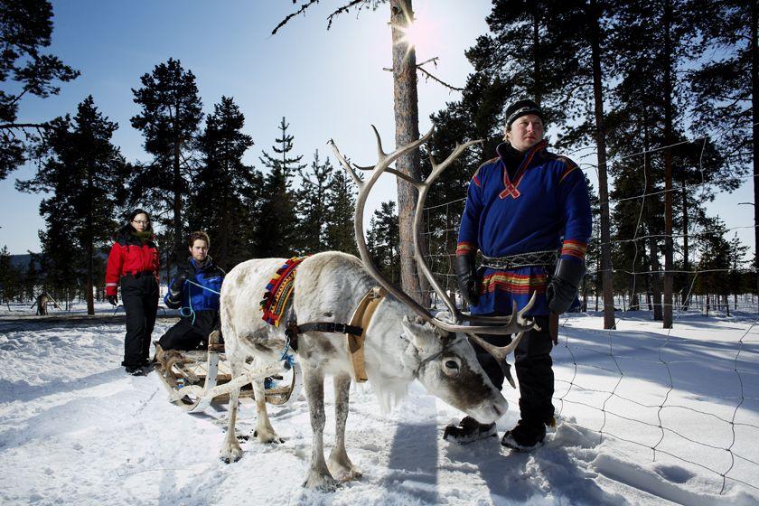 Reindeer, Ice Hotel
