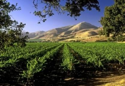 California vineyards