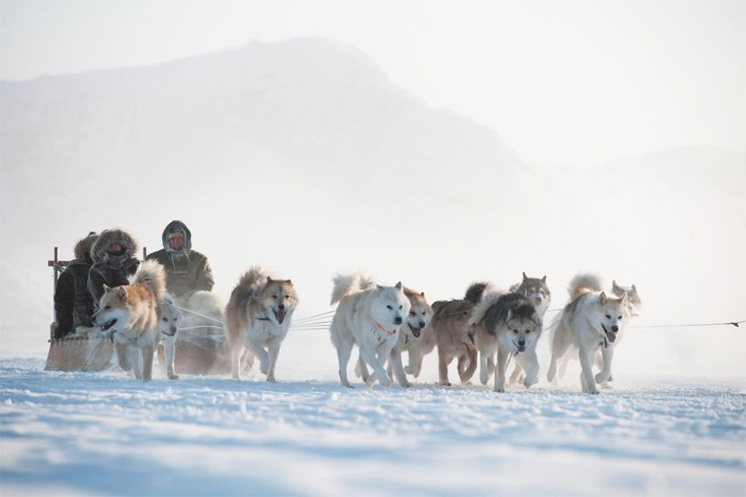 Huskies in Ilulissat - image by Andre Schoenherr