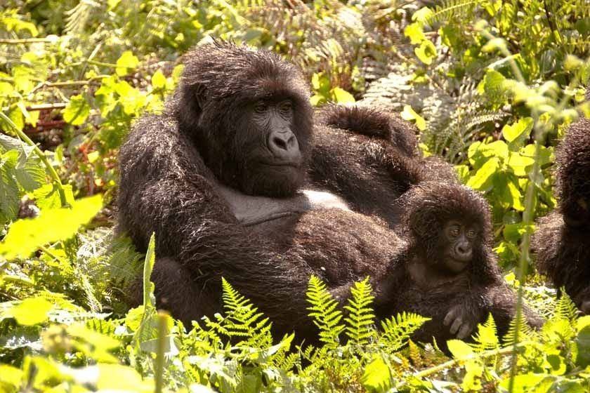 Mother and her young, Rwanda