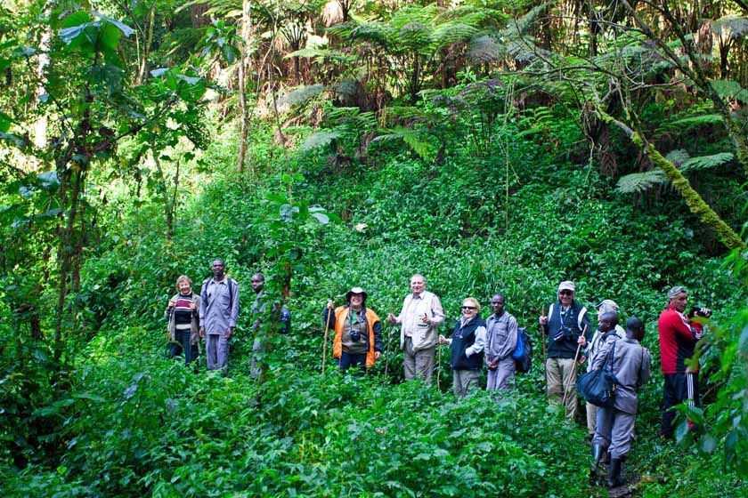 Tracking Gorillas in the Bwindi Impenetrable National Park