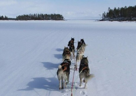 Dog Sledding, Nellim Wilderness Hotel, Lapland, Finland